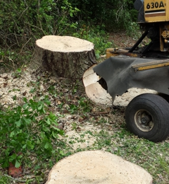 Scotts Stump Grinding 185 Norris Road Swansboro NC 28584