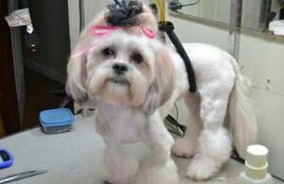 361 Pet Grooming & Boarding - Corpus Christi, TX