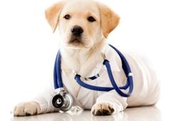 VetPronto - Mobile Veterinarians - Baton Rouge, LA