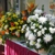Dara's Flowers