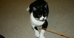 Advanced Animal Care Of Mt Pleasant - Mount Pleasant, SC