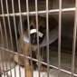 Humane Society Of Elmore County - Wetumpka, AL. Boomer being treated for Parvo