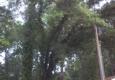 The Cutting Edge Tree Service LLC