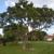 Community Tree Service