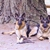 Canine Class Room Dog Training In Portland