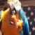 KC Bird Whisperer International - CLOSED