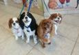 Happy Tail's Pet Spa - Wellington, FL