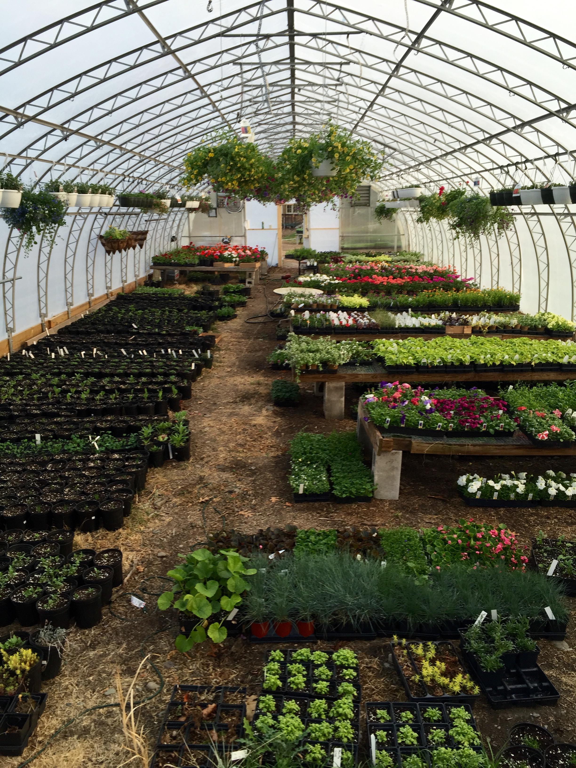 Chamberlain Acres Garden Center & Florist 824 Broadway St, Elmira ...