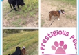 Prestigious Pets Dallas Dog Walking, Running and Pet Sitting Services - Dallas, TX
