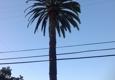 San Jose Tree Service - San Martin, CA