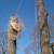 Boon Tree Service