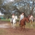 Sunset Riding STABLES....ADULT HORSE  BOARDING