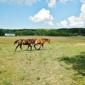 River Road Horse Farm - Hinckley, OH