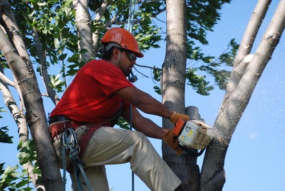 Smitty's Tree Service Inc - Alsip, IL