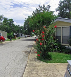 Forest Oaks Village - Austin, TX