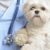 Pershing Oaks Animal Hospital