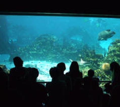 World Aquarium - Saint Louis, MO