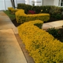 Lawnscapes of South Florida