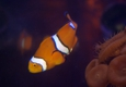 Eco reef Aquarium - pompano Beach, FL