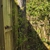 Zeigler Tree & Timber Co