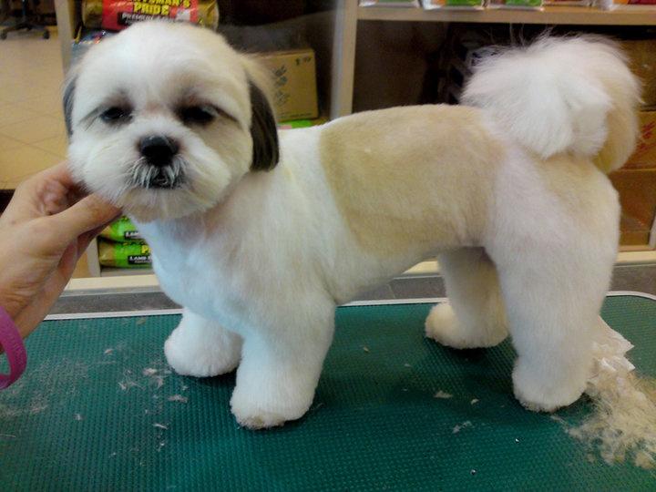 Yucaipa dog cat grooming 34309 yucaipa blvd ste f yucaipa ca yucaipa dog cat grooming 34309 yucaipa blvd ste f yucaipa ca 92399 yp solutioingenieria Gallery