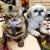 Bennett Valley Pet Center