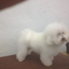 Bubbles & Clips Mobile Pet Grooming