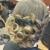 Hair FX Studio