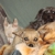 Pawsitive Pet Care