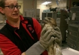 Metropolitan Emergency Animal Clinic - Rockville, MD