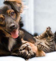 Good Shepherd Veterinary Hospital - Charleston, WV