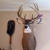 Chasing Tail Taxidermy