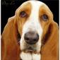 Northampton Animal Clinic - Tallahassee, FL