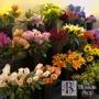 Phoenix Flower Shops