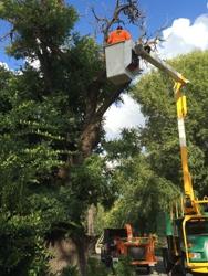 Nestor Hernandez Tree Care