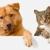 Affordable Pet Care Northwest