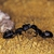 Houchins Pest Control Service