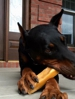 Himalayan Yak Dog Chew , Organic Dental treat , himalayan churpi Chew , Best dog treat ,   Yak Milk Dog Chew , Natural Dog Treat , Best Pet