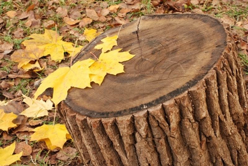 Looking to add on to your house but have a stump in the way? An arborist can help grind it.