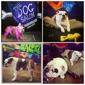 The Dog Salon - Charlotte, NC