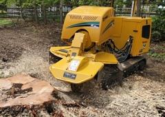 Mark's Professional Tree Service - Grand Rapids, MI