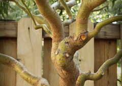 Casper Canopy Tree Care - Casper WY & Casper Canopy Tree Care 82604 - YP.com