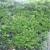 M & J Gardening Services