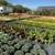 Suburban Plants & Landscape