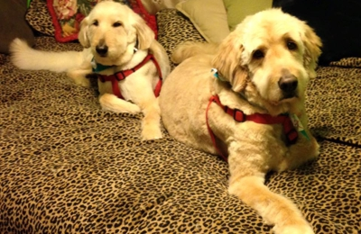 Doggy Do's by Cindy - Canton, OH. My MoJo n Sammi