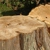 Hawksley Tree Care