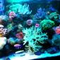 Living Reef Aquariums - Oakland Park, FL