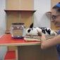 Best Friends Pet Care - Orlando, FL