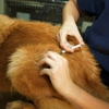 At Home Veterinary Care