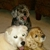 Saving Grace Animals for Adoption, Inc.